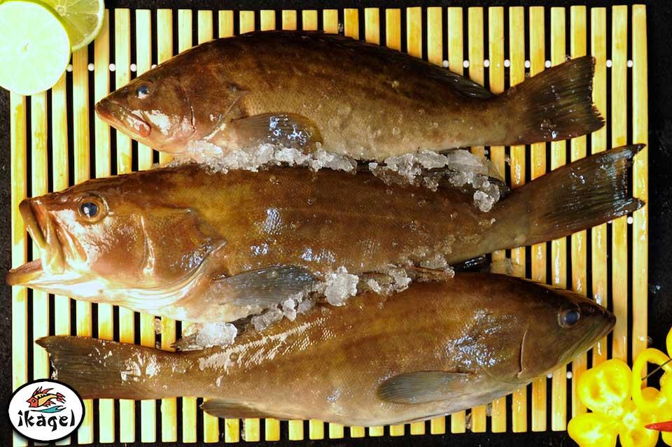 Produit Ikagel filets